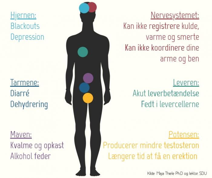 alkohols effekt på kroppen